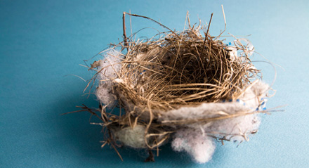 Empty Bird's Nest on Blue Backdrop